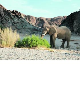 Les dunes de Sossusvlei Park, dans l'ouest du pays, sont emblématiques de la Namibie. 123RF/OLEG ZNAMENSKIY