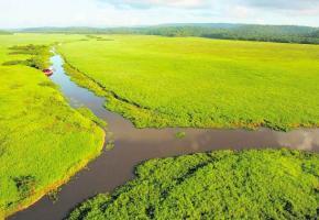 Les marais de Kaw avec le carbet flottant Ibis.