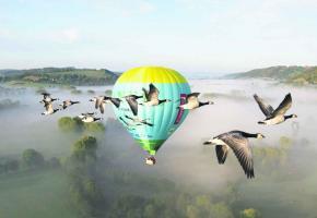 Un vol en montgolfière au milieu des oies sauvages: une expérience magique pour découvrir l'Auvergne.