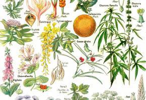 Botanique. DR