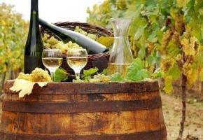Saint-François - Les vignerons s'installent