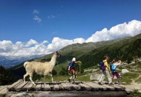 En compagnie des lamas