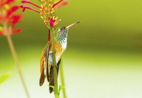 Cette année, un tout nouvel espace est dédié aux colibris. DR Les oiseaux-mouches doivent s'alimenter entre 5 et 8 fois par heure. DR Le Parc des oiseaux présente une concentration unique d'oiseaux du monde entier. DR