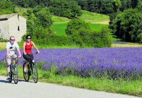 La Drôme à vélo se décline couleur lavande. Ph.Lionel Pascale. DR