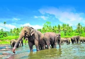 Les éléphants sont les rois du Sri Lanka. La cité historique de Polonnaruwa, inscrite au Patrimoine mondial de l'Unesco. Complément balnéaire aux Maldives (ici le Vilu Reef), à 1h30 de vol. Bouddha, dans le temple du Rocher, à Dambulla.