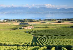 Situation satisfaisante pour les petits vignerons de la région. dr