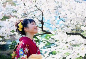 Sakura ohanami ou la contemplation des fleurs de cerisiers. HISTOIRE & VOYAGES