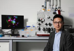 Li Tang, directeur du Laboratoire de biomatériaux pour Immunoengineering (LBI) de l'EPFL et  premier auteur de l'étude. DR