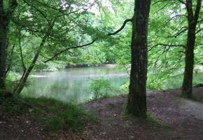 L'étang aux Moines, lieu  de silence propice à la méditation. NYON TOURISME REGION