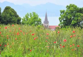 Lausanne va moissonner à l'ancienne