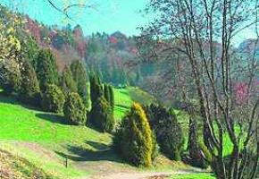 Forêts Morgiennes - Un plan directeur