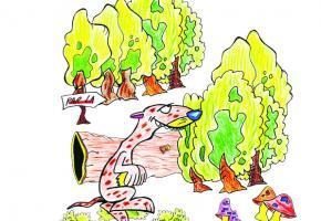 CONTE - Un samedi qui conte  - Les bois de Sauvabelin
