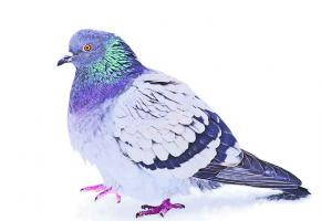 EGLISE SAINT-FRANCOIS - Pigeonnier de l'Eglise