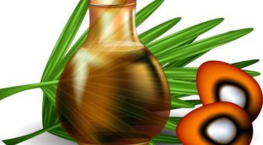 En Indonésie, la conversion de forêts tropicales en cultures intensives de palmeraie à huile est problématique en termes d'émissions de carbone. 123RF/EPFL