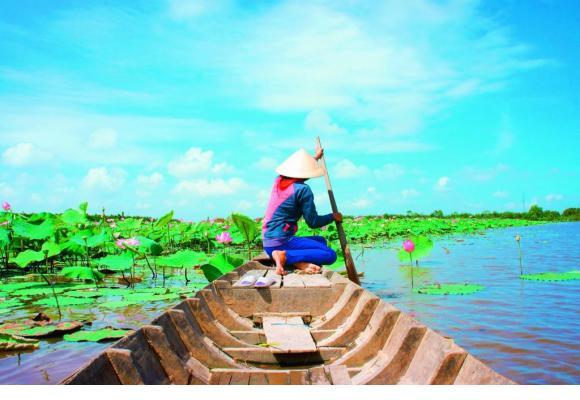 Une activité prisée dans le delta du Mékong, au Vietnam, la récolte des fleurs de lotus.