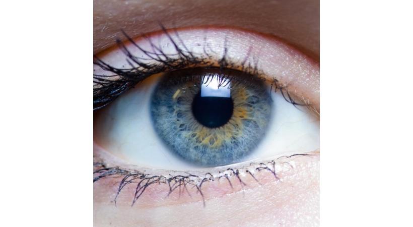 L'œil nu