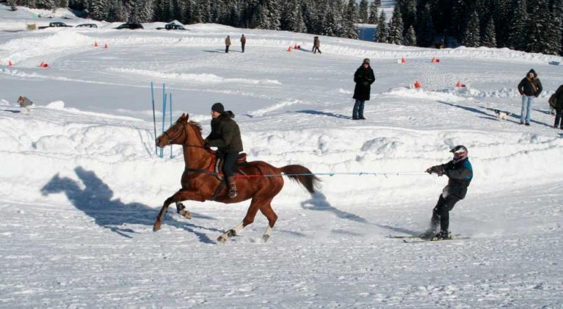 Skijöring à Château-d'Oex