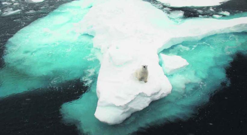 L'ours polaire est curieux.