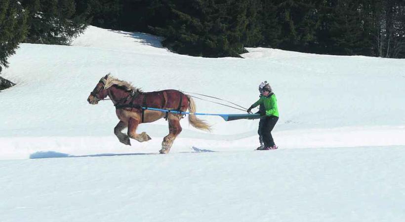 Le Ski Joering, c'est amusant!