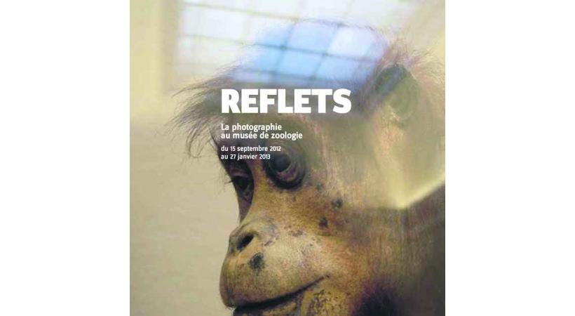 Reflets - Musée cantonal de Zoologie du Palais de Rumine.