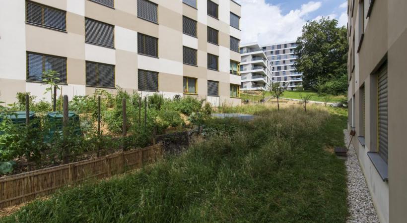 Dans le quartier des Fiches Nord, les habitants planteront cet automne 500 arbustes adaptés au changement climatique. TROTTA – VILLE DE LAUSANNE