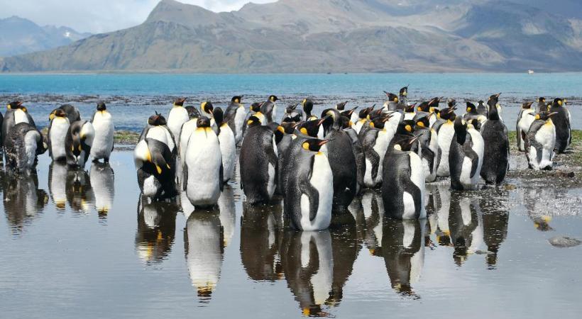 Les pingouins font figure de stars en Antarctique .DR