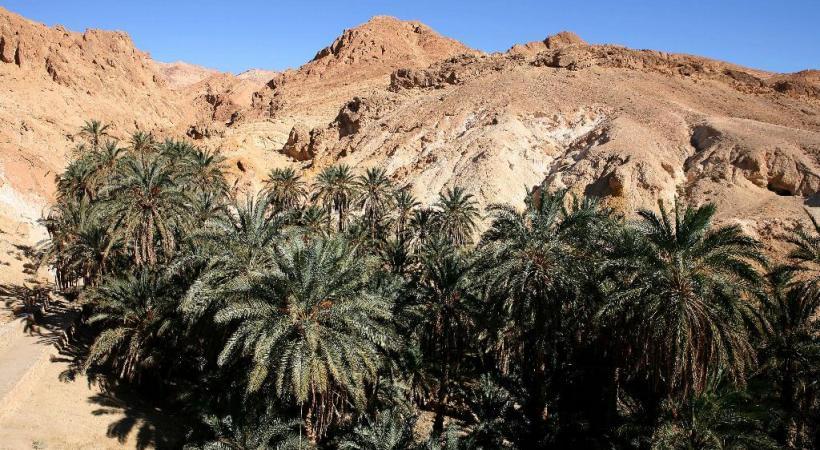 L'authenticité des oasis de montagnes tunisiennes. ONTT