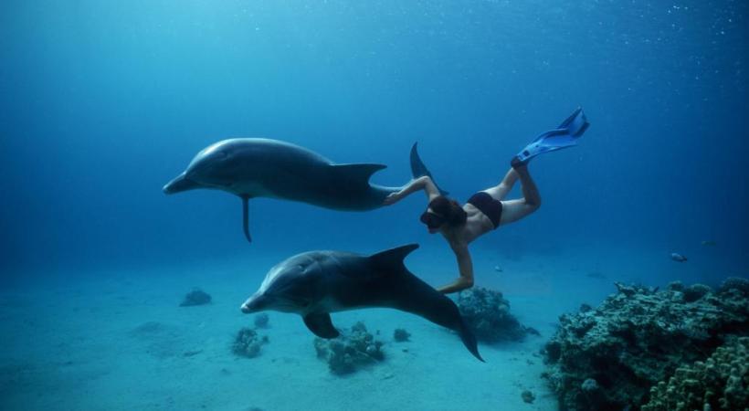 Nager avec des dauphins.