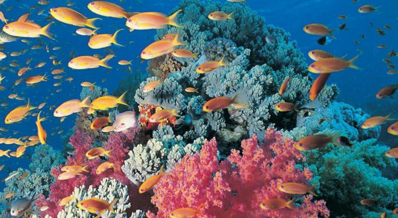 Les fonds de la Mer Rouge sont connus pour leurs couleurs.