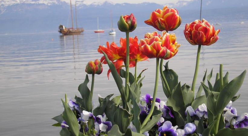 Le lac, un allié pour le développement durable? A Morges on y croit. dr
