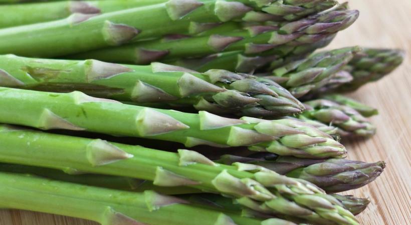 L'asperge est une plante originaire de l'est du bassin méditerranéen.