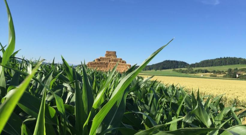 Testez le labyrinthe de maïs... de nuit! DR