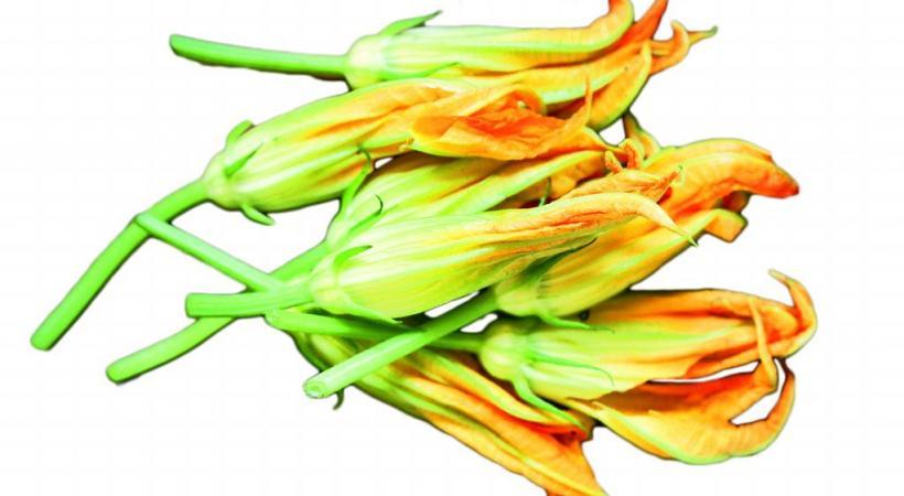 Fleurs de courgettes