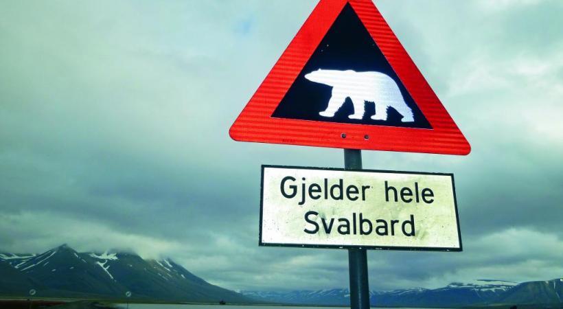 L'ours polaire peut constituer un danger même à Longyearbyen.