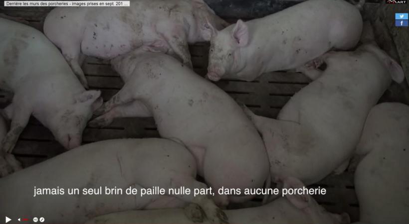 Capture d'écran de la vidéo diffusée par la Fondation Mart. DR
