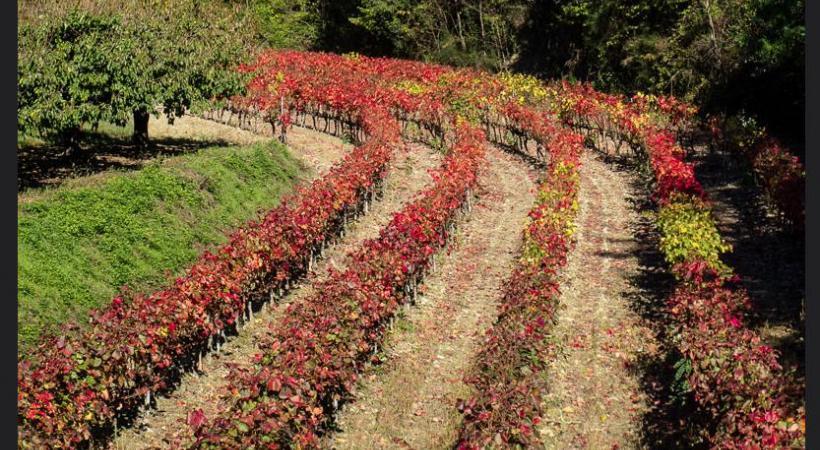 Vous sentez cette odeur si particulière? A en avoir l'eau à la bouche! GETTY IMAGES/MARIA ESEAU La fameuse truffe noire Tuber melanosporum. L.PASCALE-LADRôMETOURISME Le village perché de La Laupie.  De la Drôme des collines à la Drôme provençale, le vignoble s'étend sur plus de 20'000 hectares. DR L.PASCALE-LADRôMETOURISME