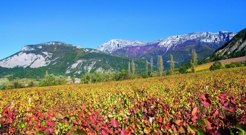 De la Drôme des collines à la Drôme provençale, le vignoble s'étend sur plus de 20'000 hectares. DR