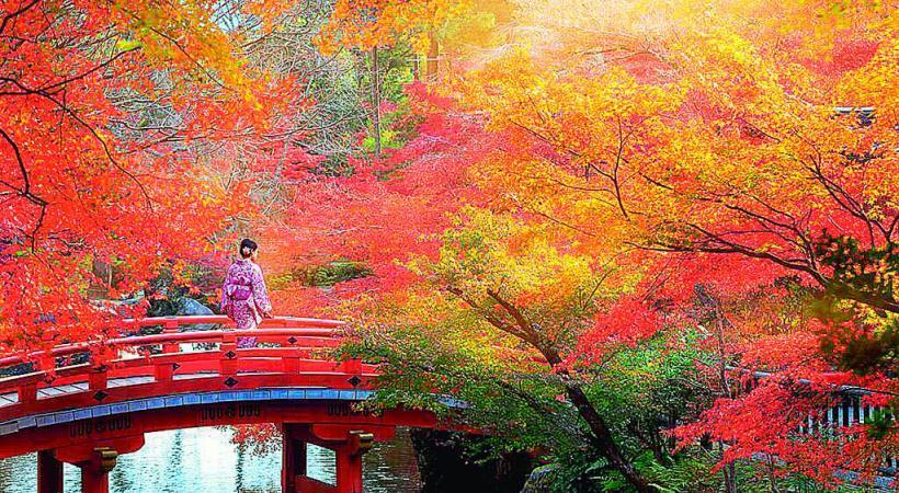 L'automne est tombé sur Kyoto. dr