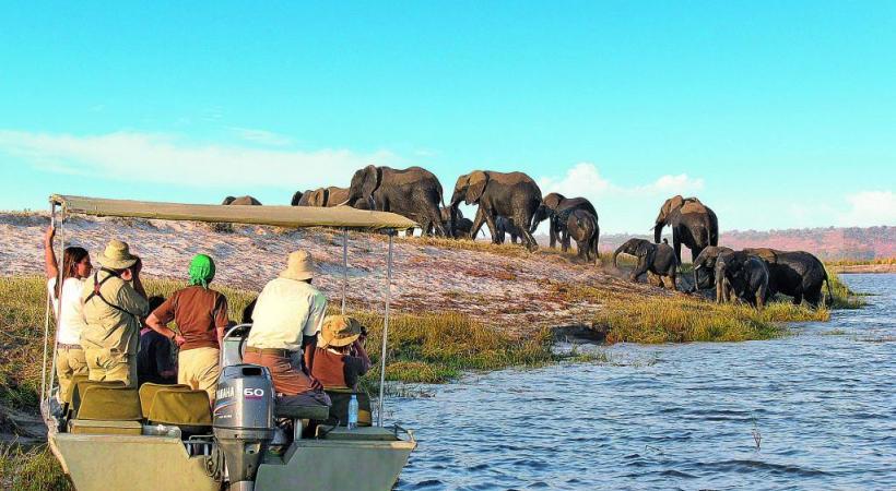 Approcher au plus près les éléphants. ALEKSANDAR TODOROVIC