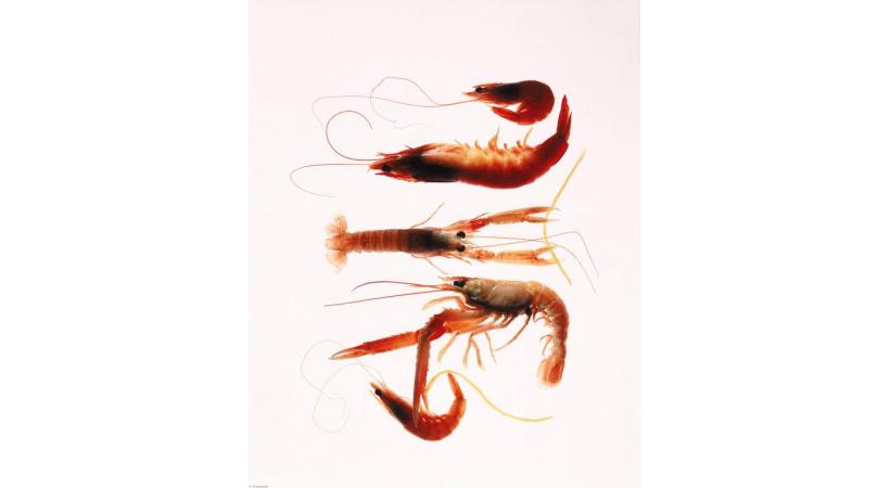 Crevettes et gambas, une vraie note estivale