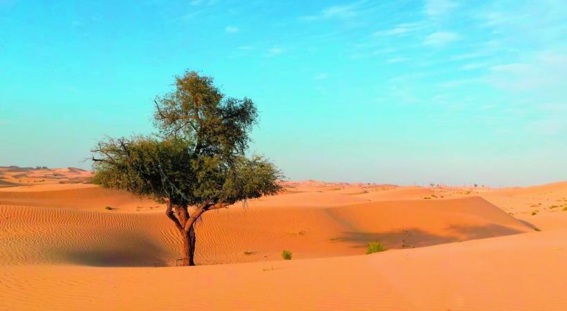 Abu Dhabi, un émirat au cœur du désert. DR