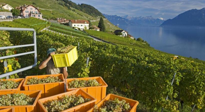 Les changements climatiques en cours modifient la typicité des vins. dr