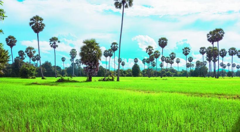 Paysage typique de la campagne cambodgienne.