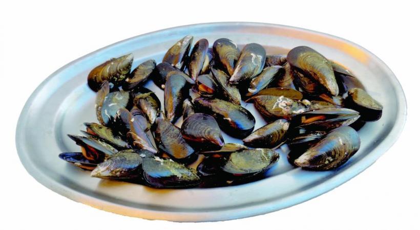 Effervescence culinaire à la fête des fruits de mer.