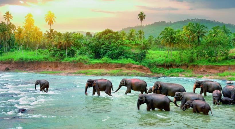 Destination écologique majeure, le Sri Lanka abrite, par exemple, 400 éléphants au sein du Uda Walawe National Park.
