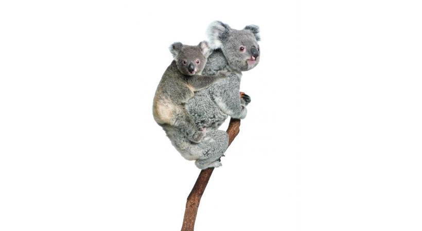 co. La forêt pluviale, plus grande concentration d'espèces témoins de l'évolution des plantes, marsupiaux et oiseaux.