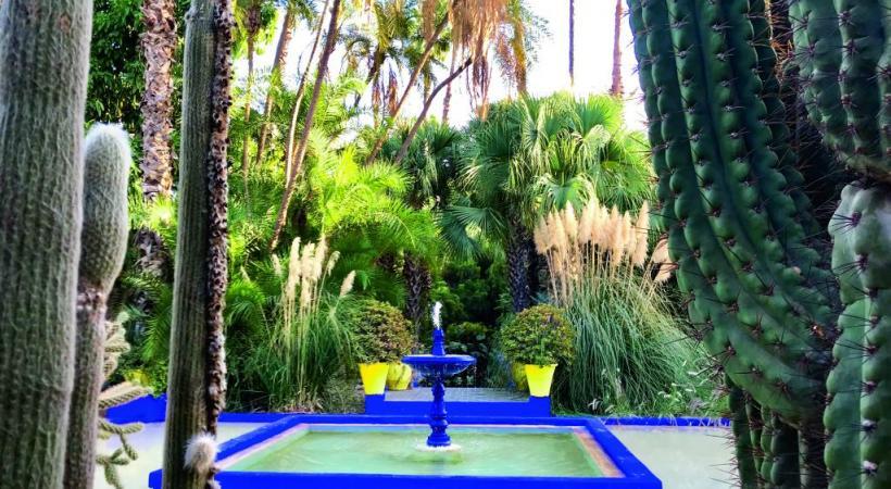 Les jardins de Majorelle.