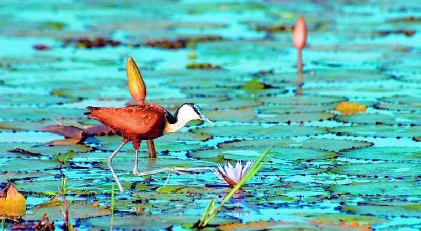 Le lac Kariba, véritable paradis ornithologique.