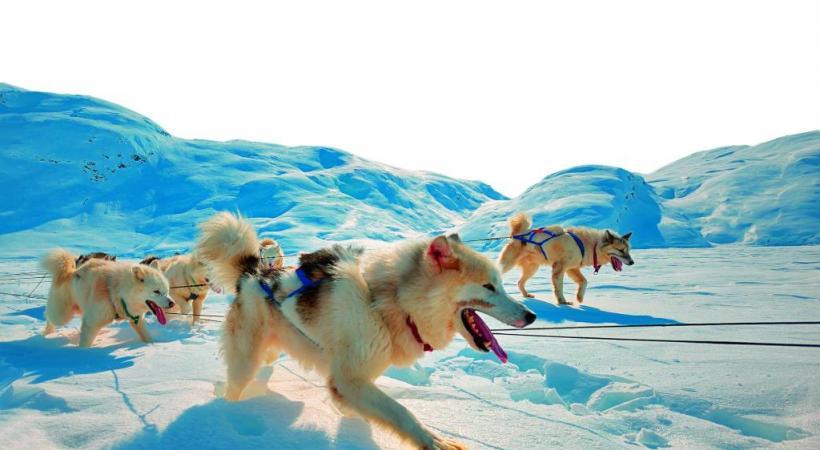 En hiver, le traîneau à chiens facilite les déplacements. DR