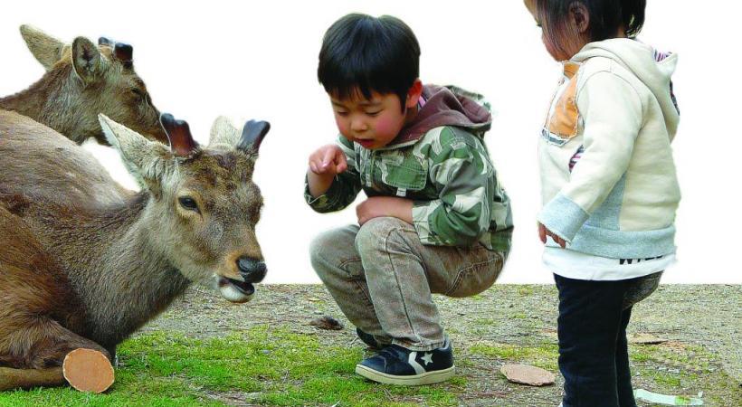 Nourrir les cerfs, un amusement total pour les plus petits. PIXABAY